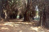 Cubbon Park (2 kms from MG Road)
